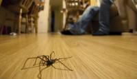 Kalorifer Böceklerden Nasıl Temizlenir?