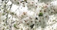 Alerjisi Olanların Yetiştirebileceği En İyi Çiçekler